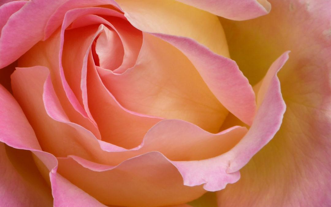 Élj a színek útmutatásával: Augusztus 29. – Szeptember 2.