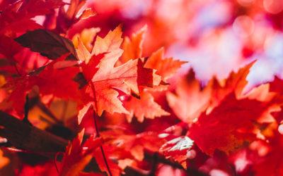 Élj a színek útmutatásával: Október 4. – 8.